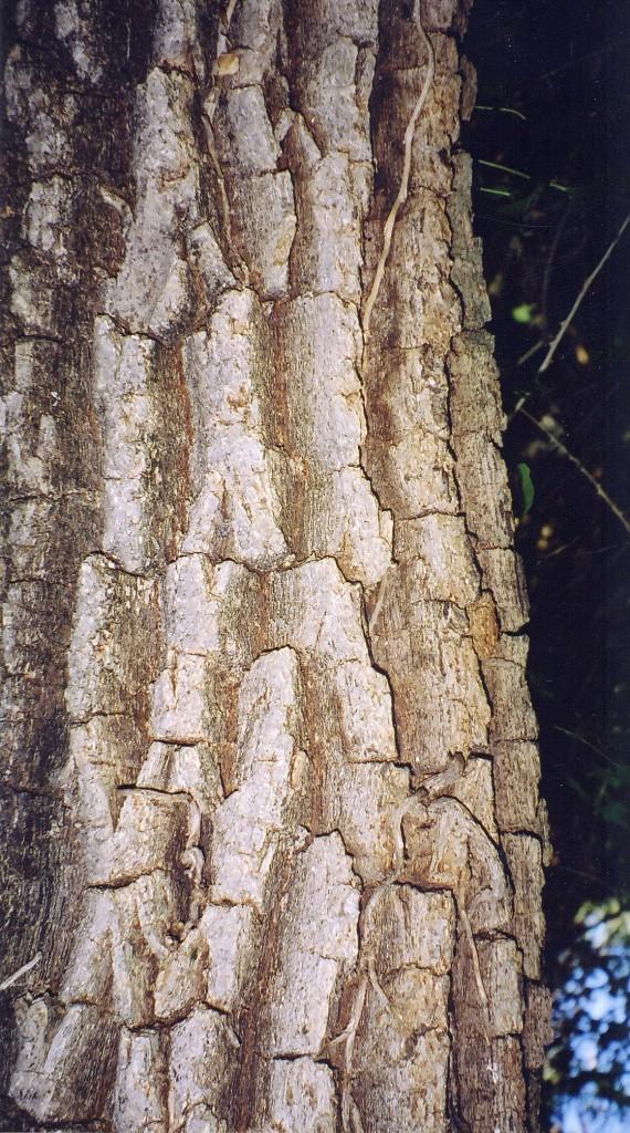 écorce d'un tone wase - pépinière du bosc