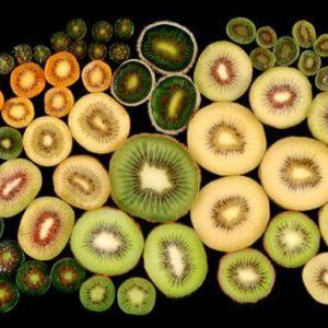 KIWIS - actinidia chinensis