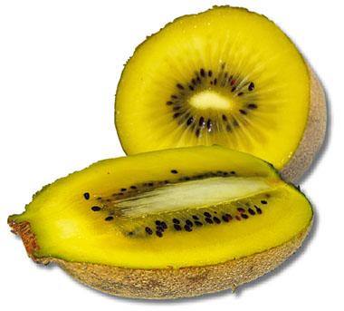 kiwi sorelli - pépinière du bosc - kiwi sorelli - actinidia chinensis - kiwi jaune - pépinière du bosc - acheter