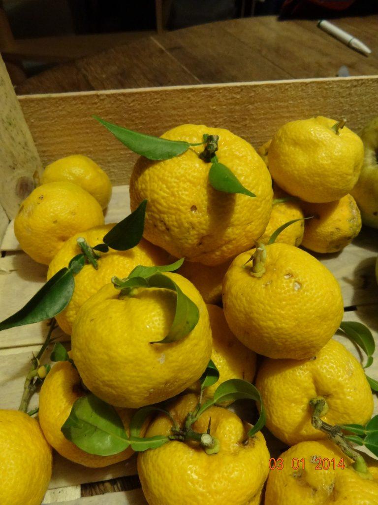 yuzu citrus junos - pépinière du bosc