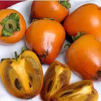 acheter kaki - plaqueminier - diospyros kaki - pépinière du bosc - acheter arbre plant variété chocolate