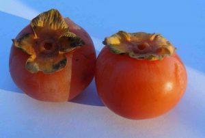acheter kaki - plaqueminier - diospyros kaki - pépinière du bosc - acheter arbre plant variété meader