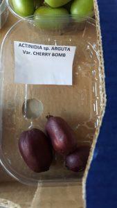 kiwai - actinidia arguta - cherry bomb - pépinière du bosc - acheter